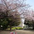 目黒でお花見2016(3)祐天寺、油面公園周辺の桜