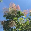 植物が青々〜空は真っ青〜