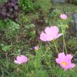 畑の花 7月