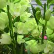 アイスィープリンセスの花は