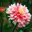 昭和記念公園の花たち