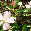アンデルセン広場のバラ