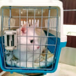 11月16日(金)のつぶやき #ミルコ @mirko_cat 今日からお泊まり&ワクチン注射 #白猫 遠賀川横の道路、夜霧ヤバっ 株式会社AD-CREATE #関西出張