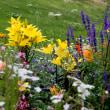 「あいちサトらぼ」花壇に咲くシロタエギクやコスモスなどの花
