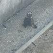 東山動物園  行って来た