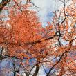 紅葉清閑×William Wordsworth