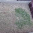 お隣の木陰で東側の芝生を刈ります(*^^)v