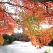 11月19日馬場記念公園&11月20日高岡古城公園