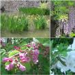 中川 花と緑の散歩道