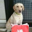 福袋@犬のです❗