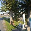 まち歩き南1006 戊辰戦争 東軍 戦死者埋骨地碑