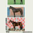 馬体で見る脚質診断