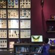 毎月第3日曜日は琵琶湖博物館が滋賀県民無料の日です!