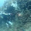 8/20(月)松江FUN DIVE!! ボートで深い海へGo!