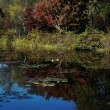 モネの庭の池1