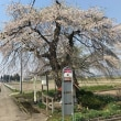 2765)桜in大仙(桜バス停)