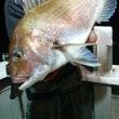 21日月曜深夜スルメ、マイカ、鯛27枚にヒラメが舞い踊りpart2♪