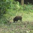 みどり市鹿田山フットパスでアサギマダラを撮影。