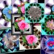 JTrim で作る枠 花