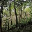 八ヶ岳 杣添尾根-横岳-赤岳 往復登山記 2