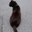 梅雨のりんちゃんと黒猫ちゃん