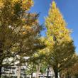 秋晴れの休日
