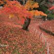 紅葉終盤:岡山城と岡山後楽園