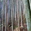 山道の杉枝を片づけながら