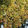 秋ふぉと。。。。。。