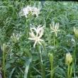 猫散歩・里山集い・里山の花を見て歩く