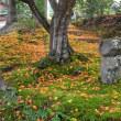 京都の紅葉2017・朱色に染まる苗秀寺