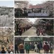 さくらまつり期間中の鶴山公園入園者数(平成30年)