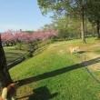 木陰のある公園へ