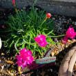 庭に咲いている花