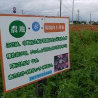 地域の環境保全の取り組み…「ポピー畑!」