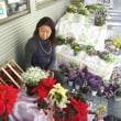 シャコバサボテンの豪奢な花、雪のようなユーフォルビア白雪姫、販売風景