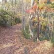 晩秋・枯葉のジュータン