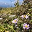 草原の登山道 9日