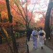 京都北野天満宮のもみじ苑