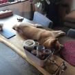 うちの犬が食卓に…