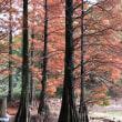 秋の「篠栗 九大の森」へ.
