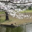 思わぬ出来事でした。!!周りは桜が満開です。!!