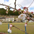 3/27(火)明日!「さくらのヒーリングピアノコンサート」@熊野本宮『三里小学校』♪