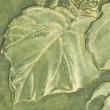 「王将」を蒔種、「さとぶき613」苗・「ミニ白菜」苗の移植