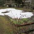 ようやく5%残すのみ、「庭の根雪」。