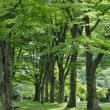 弘前公園の古代蓮とスイレン