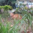草むらや土の上で暖をとるノラ猫さんたち!