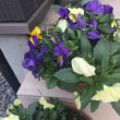 長男の家のお花たち