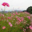 嵐の前の静けさの中を麻績村と旧大岡村に跨る聖山へ。初物のジコボウを求めて(妻女山里山通信)