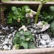 春の雪が降った日に工事